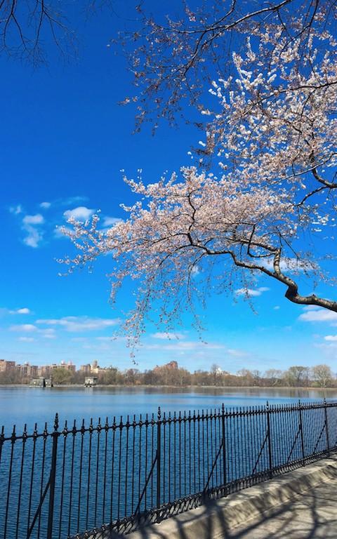 中央公园之春